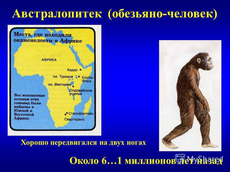 Австралопитек (обезьяно-человек) Около 6…1 миллионов лет назад Хорошо передвигался на двух ногах