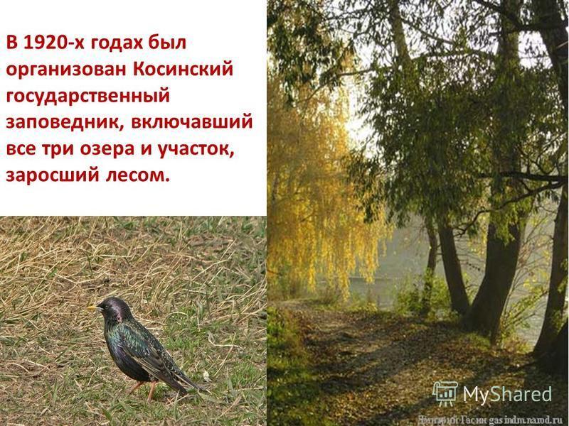 В 1920-х годах был организован Косинский государственный заповедник, включавший все три озера и участок, заросший лесом.