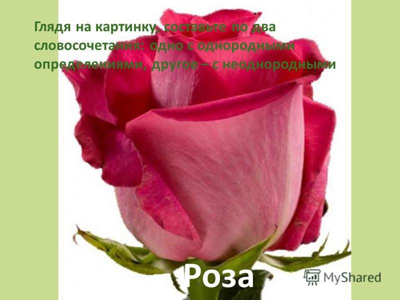 Роза Глядя на картинку, составьте по два словосочетания: одно с однородными определениями, другое – с неоднородными