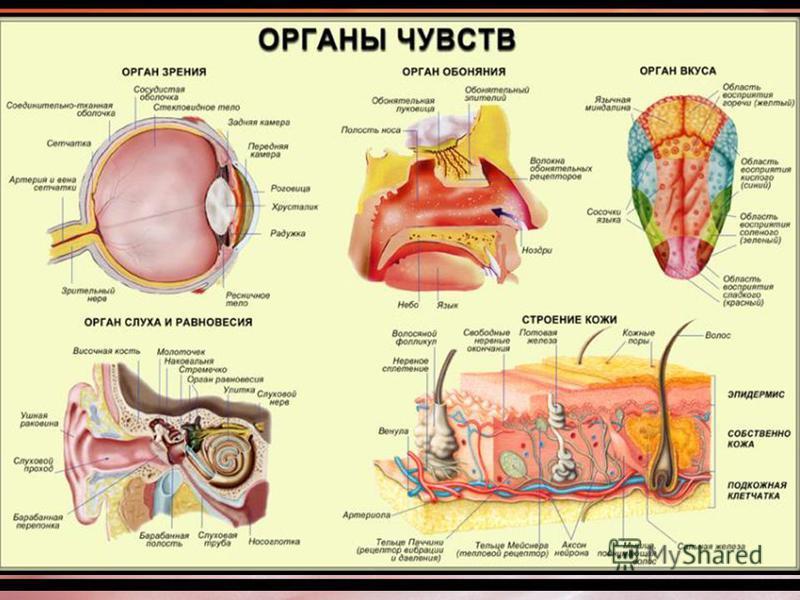 Полость среднего уха (барабанная полость) продолжается в слуховую трубу, которая открывается в глотку, поэтому при воспалительных заболеваниях носоглотки, микроорганизмы могут попасть в полость среднего уха и вызвать его воспаление.