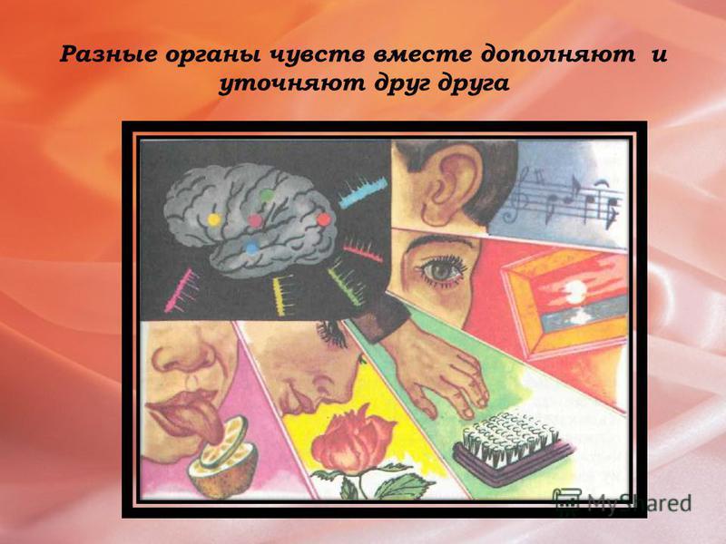 Таблица Чувство Орган чувства Анализатор Слух Ухо Орган чувств- чувствительный нерв- зона коры больших полушарий Обоняние Нос Вкус Язык Зрение Глаз Осязание Кожа Кожно- мышечная чувствительность(равновесие) Внутреннее ухо