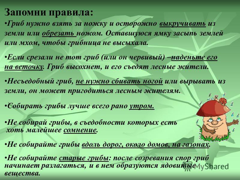 Во время Великой Отечественной войны грибы -трутовики заменяли вату. Их использовали при перевязке ран.