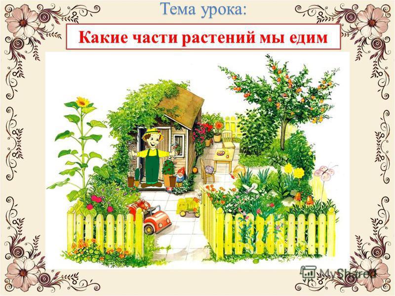 Тема урока: Какие части растений мы едим