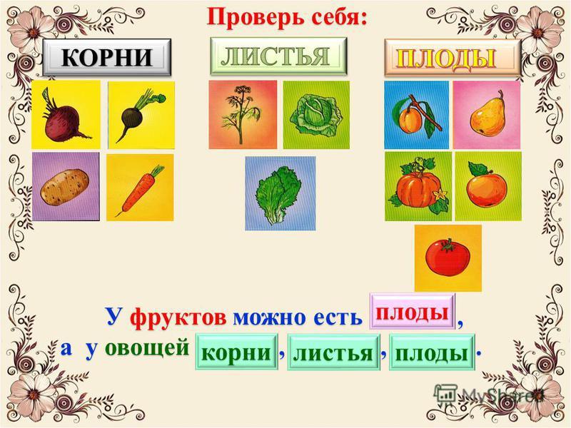 У фруктов можно есть …, а у овощей …, …, …. а у овощей …, …, …. КОРНИКОРНИ Проверь себя: плоды корни листья плоды