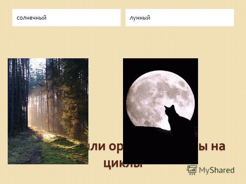 Обряды были ориентированы на циклы солнечный лунный