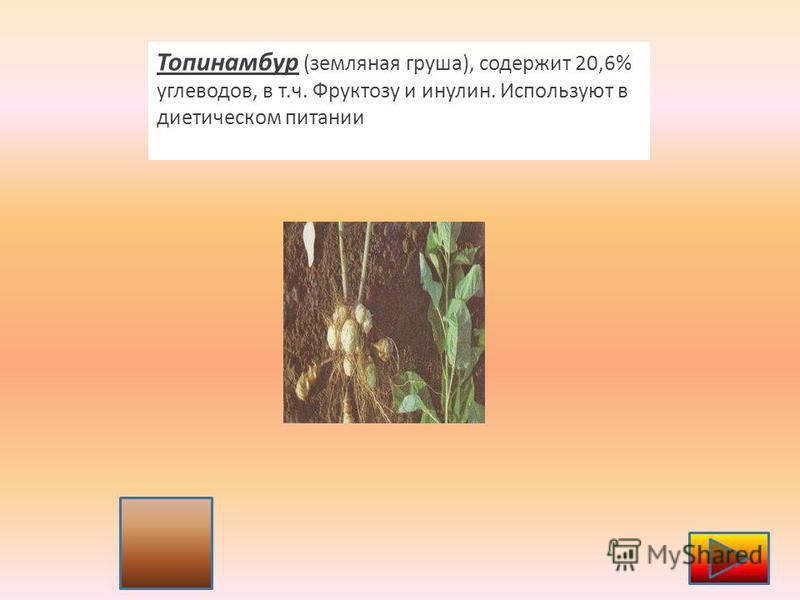 6 Топинамбур (земляная груша), содержит 20,6% углеводов, в т.ч. Фруктозу и инулин. Используют в диетическом питании