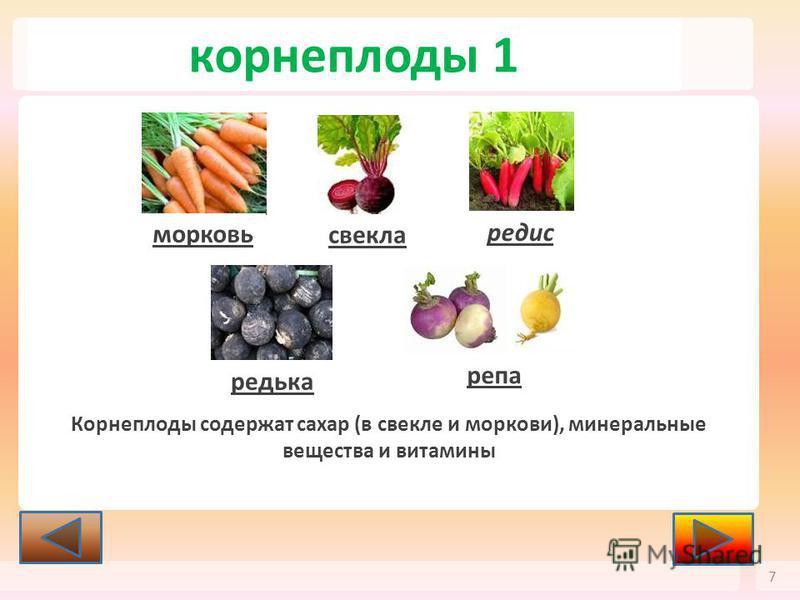 корнеплоды 1 7 морковь свекла редис редька репа