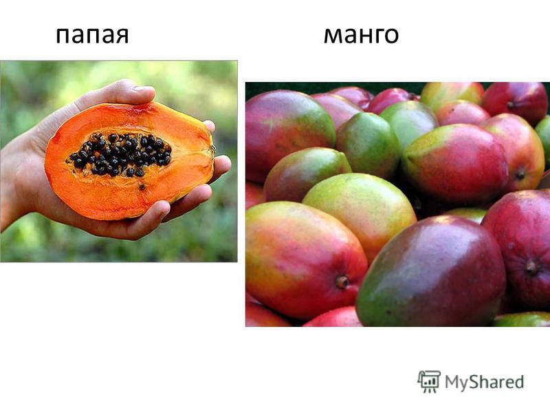 папайя манго