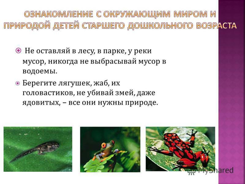 Не оставляй в лесу, в парке, у реки мусор, никогда не выбрасывай мусор в водоемы. Берегите лягушек, жаб, их головастиков, не убивай змей, даже ядовитых, – все они нужны природе.