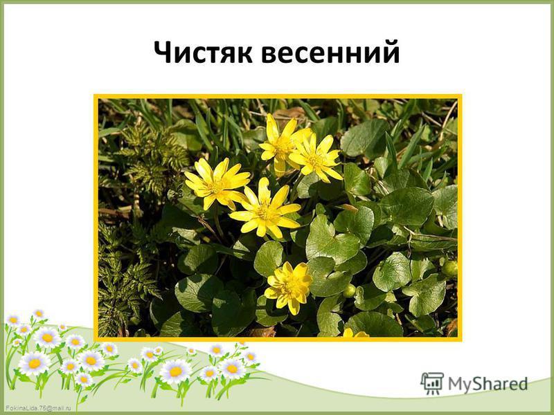 FokinaLida.75@mail.ru Чистяк весенний
