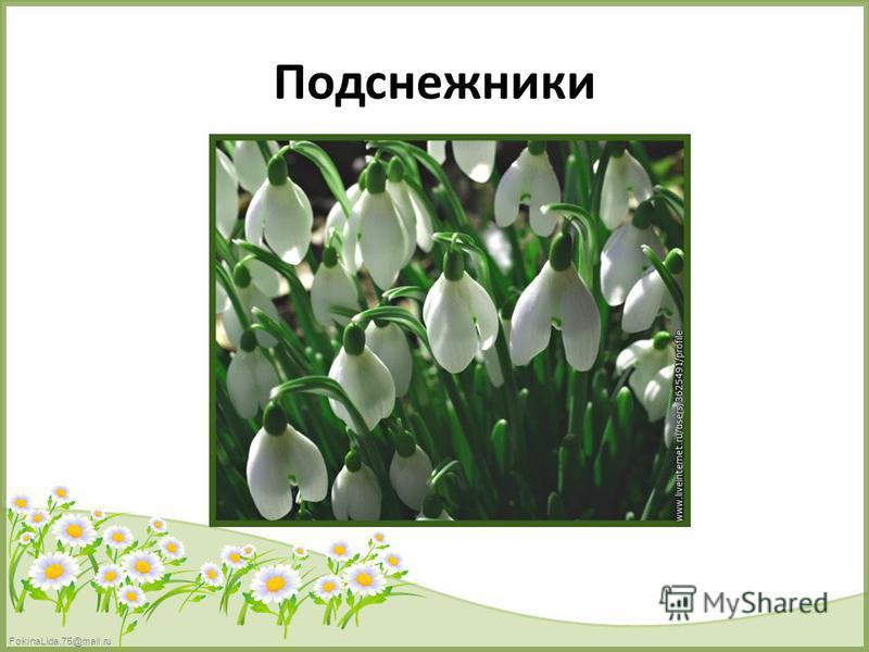 FokinaLida.75@mail.ru Подснежники