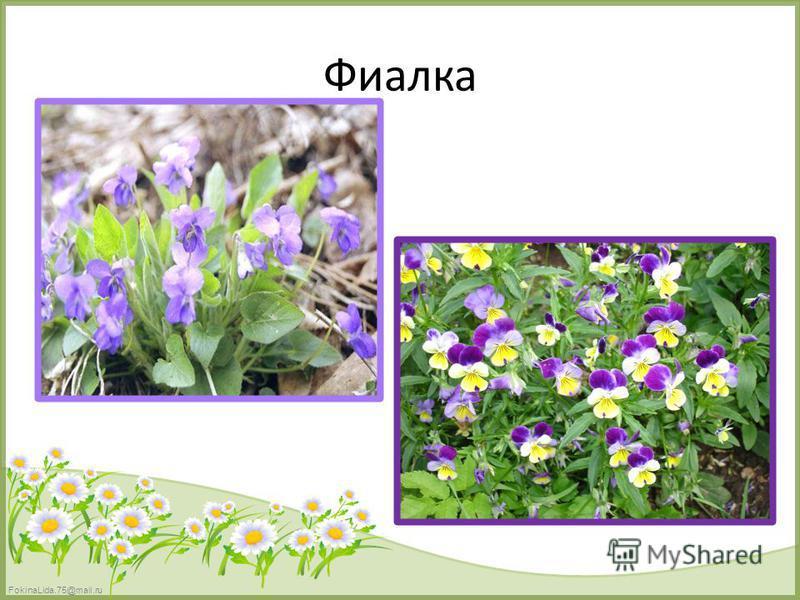 FokinaLida.75@mail.ru Фиалка