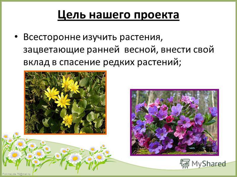 FokinaLida.75@mail.ru Цель нашего проекта Всесторонне изучить растения, зацветающие ранней весной, внести свой вклад в спасение редких растений;