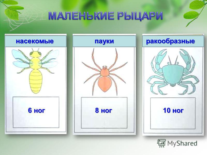 насекомые пауки ракообразные 6 ног 8 ног 10 ног