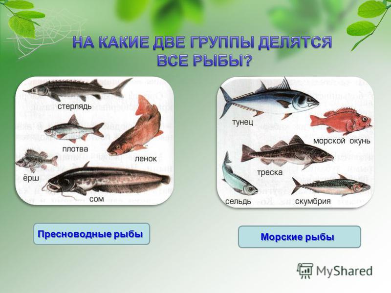 Морские рыбы Пресноводные рыбы