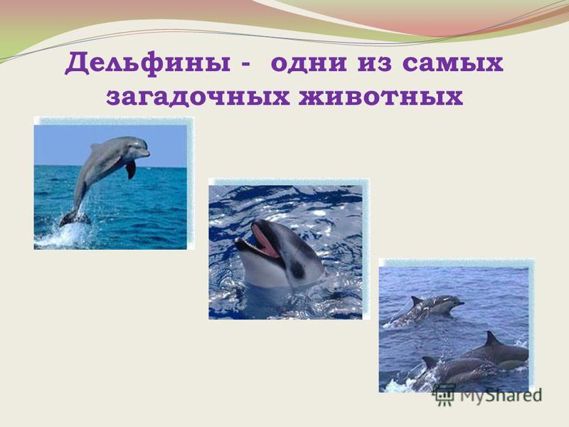 Дельфины - одни из самых загадочных животных