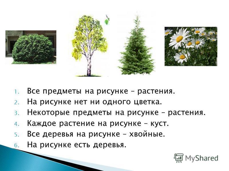 1. Все предметы на рисунке – растения. 2. На рисунке нет ни одного цветка. 3. Некоторые предметы на рисунке – растения. 4. Каждое растение на рисунке – куст. 5. Все деревья на рисунке – хвойные. 6. На рисунке есть деревья.