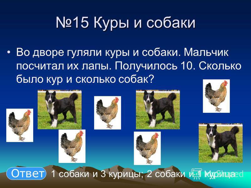 15 Куры и собаки 15 Куры и собаки Во дворе гуляли куры и собаки. Мальчик посчитал их лапы. Получилось 10. Сколько было кур и сколько собак? 1 собаки и 3 курицы; 2 собаки и 1 курица Ответ