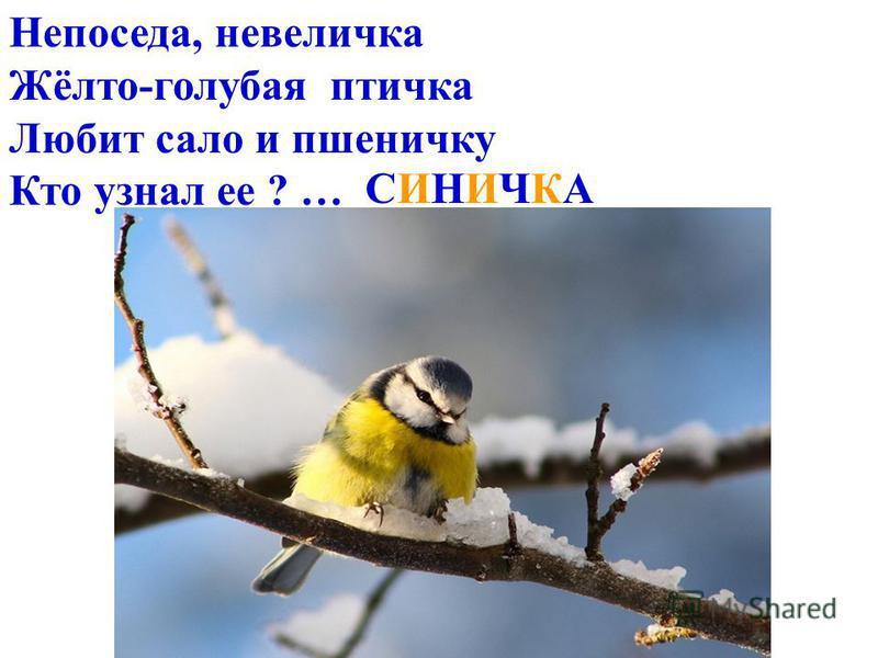 Непоседа, невеличка Жёлто-голубая птичка Любит сало и пшеничку Кто узнал ее ? … СИНИЧКАСИНИЧКА