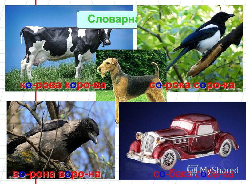 Словарная работа ко-рова корова сорока соро-ка во-рона ворона собака соба-ка