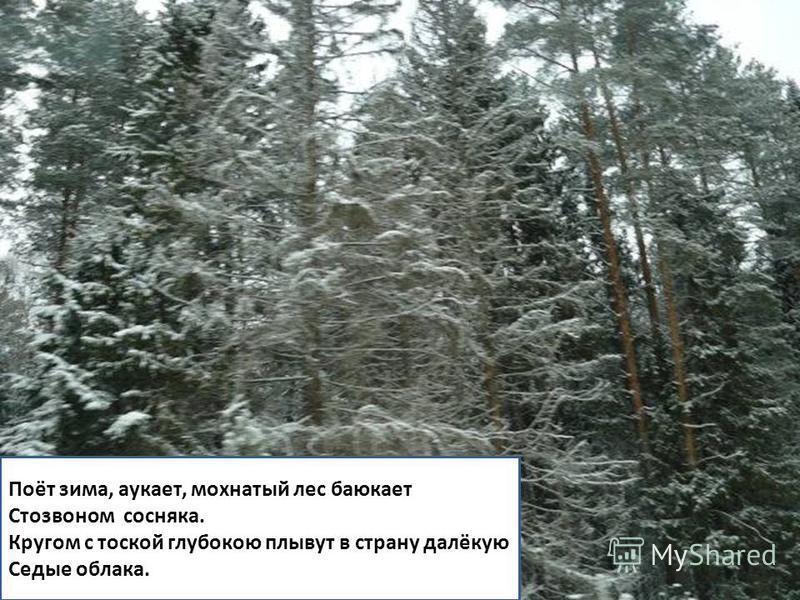 Поёт зима, аукает, мохнатый лес баюкает Стозвоном сосняка. Кругом с тоской глубокою плывут в страну далёкую Седые облака.