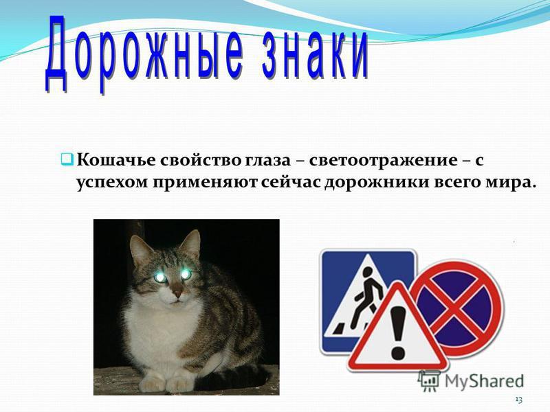 Кошачье свойство глаза – светоотражение – с успехом применяют сейчас дорожники всего мира. 13