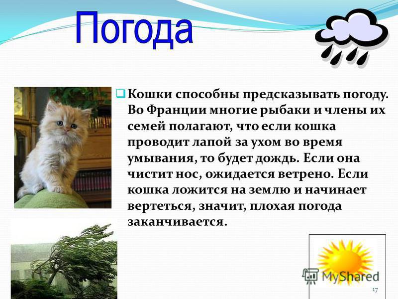 Кошки способны предсказывать погоду. Во Франции многие рыбаки и члены их семей полагают, что если кошка проводит лапой за ухом во время умывания, то будет дождь. Если она чистит нос, ожидается ветрено. Если кошка ложится на землю и начинает вертеться