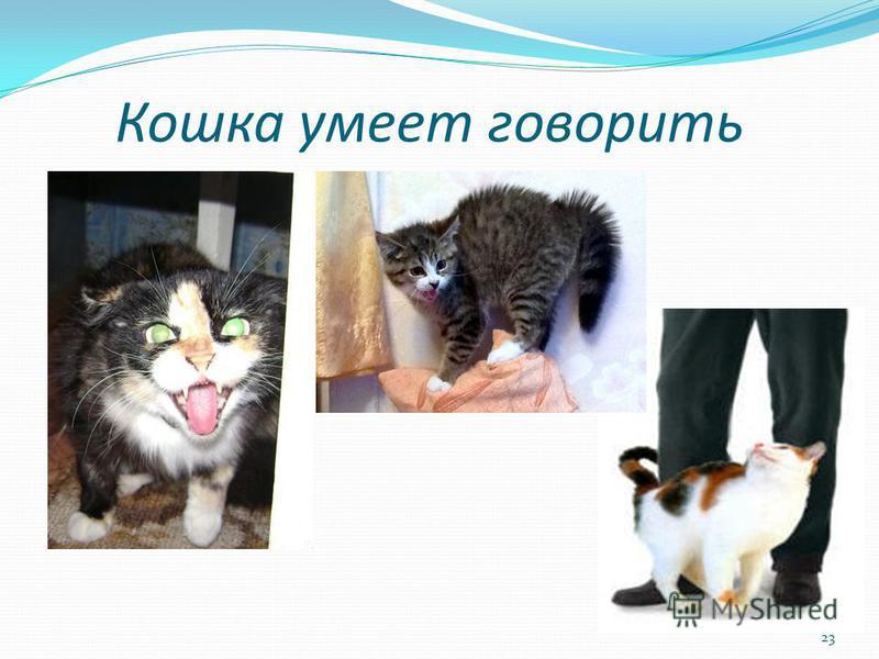 Кошка умеет говорить 23