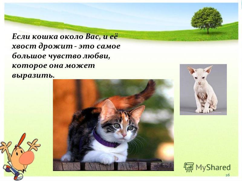 Если кошка около Вас, и её хвост дрожит - это самое большое чувство любви, которое она может выразить. 26
