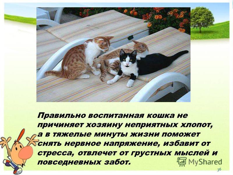 Правильно воспитанная кошка не причиняет хозяину неприятных хлопот, а в тяжелые минуты жизни поможет снять нервное напряжение, избавит от стресса, отвлечет от грустных мыслей и повседневных забот. 36