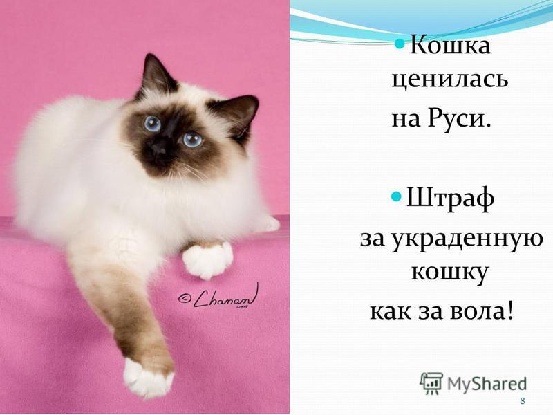 Кошка ценилась на Руси. Штраф за украденную кошку как за вола! 8