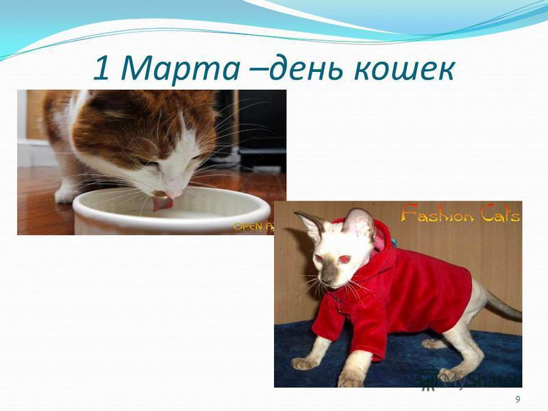1 Марта –день кошек 9