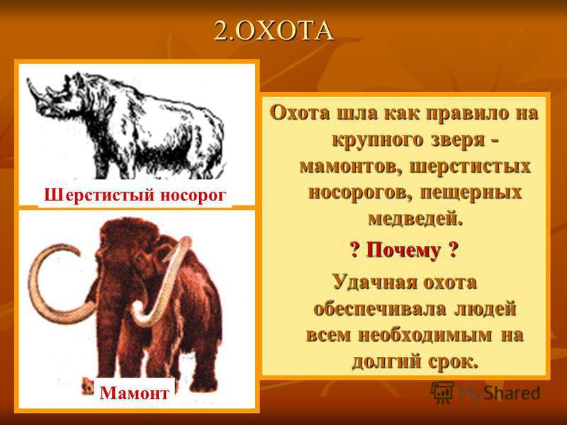 Охота шла как правило на крупного зверя - мамонтов, шерстистых носорогов, пещерных медведей. ? Почему ? Удачная охота обеспечивала людей всем необходимым на долгий срок. Шерстистый носорог Мамонт 2.ОХОТА