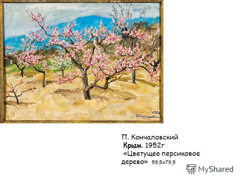 П. Кончаловский Крым. 1952 г «Цветущее персиковое дерево» 59,5 х 79,5