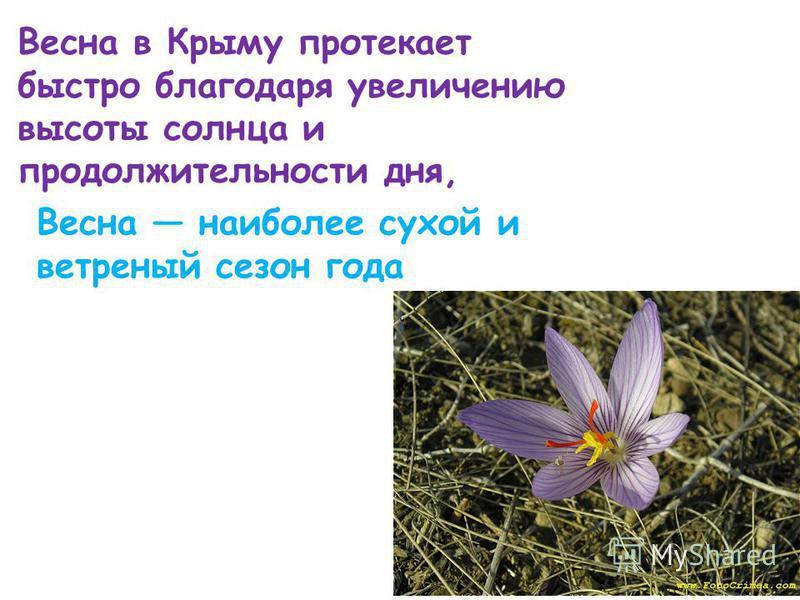 Весна в Крыму протекает быстро благодаря увеличению высоты солнца и продолжительности дня, Весна наиболее сухой и ветреный сезон года