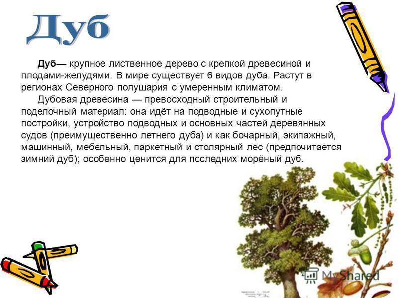 Дуб крупное лиственное дерево с крепкой древесиной и плодами-желудями. В мире существует 6 видов дуба. Растут в регионах Северного полушария с умеренным климатом. Дубовая древесина превосходный строительный и поделочный материал: она идёт на подводны
