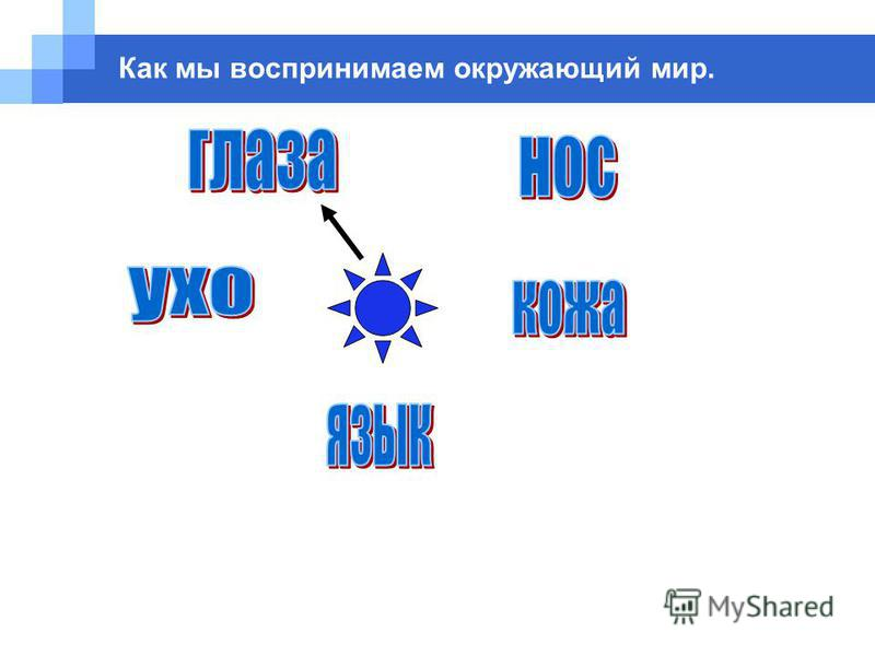 Company name www.themegallery.com Как мы воспринимаем окружающий мир.