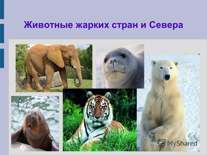 Животные жарких стран и Севера