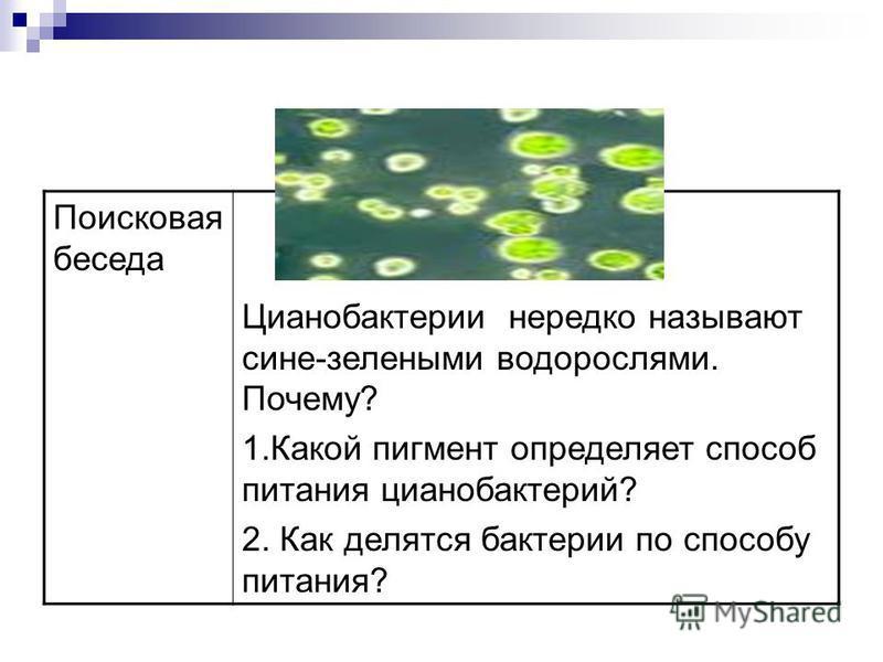 Поисковая беседа Цианобактерии нередко называют сине-зелеными водорослями. Почему? 1. Какой пигмент определяет способ питания цианобактерий? 2. Как делятся бактерии по способу питания?