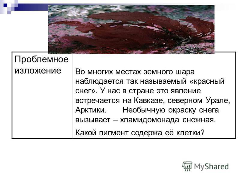 Проблемное изложение Во многих местах земного шара наблюдается так называемый «красный снег». У нас в стране это явление встречается на Кавказе, северном Урале, Арктики. Необычную окраску снега вызывает – хламидомонада снежная. Какой пигмент содержа