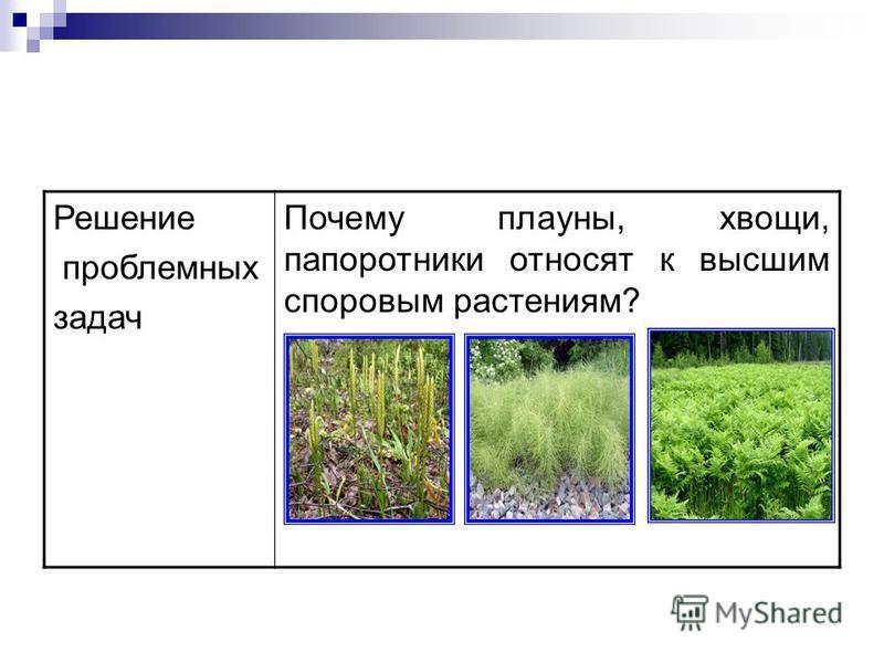 Решение проблемных задач Почему плауны, хвощи, папоротники относят к высшим споровым растениям?