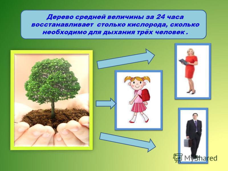 Дерево средней величины за 24 часа восстанавливает столько кислорода, сколько необходимо для дыхания трёх человек.