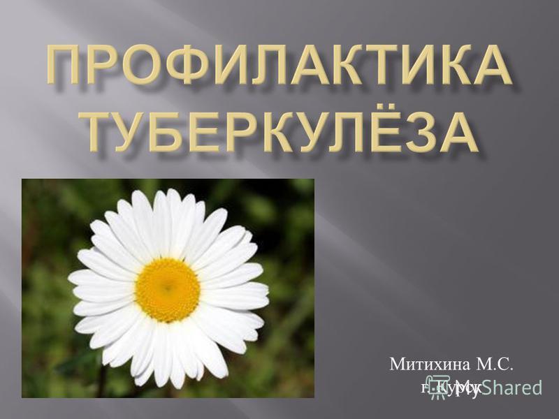 Митихина М. С. г. Курск