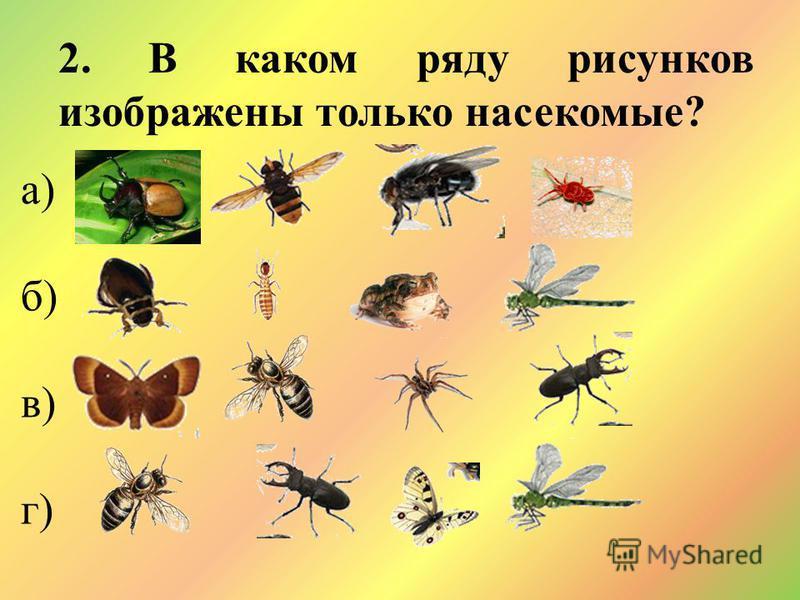 2. В каком ряду рисунков изображены только насекомые? а) б) в) г)
