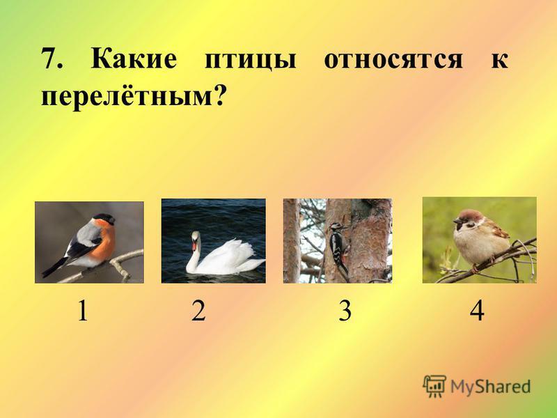 7. Какие птицы относятся к перелётным? 1 2 3 4