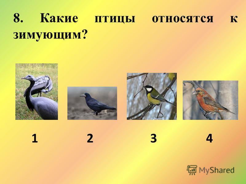 8. Какие птицы относятся к зимующим? 1 2 3 4