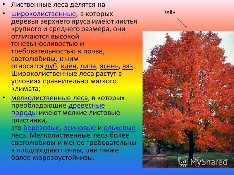 Лиственные леса делятся на широколиственные, в которых деревья верхнего яруса имеют листья крупного и среднего размера, они отличаются высокой теневыносливостью и требовательностью к почве, светолюбивы, к ним относятся дуб, клён, липа, ясень, вяз. Ши