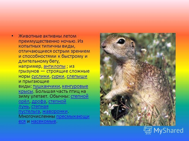 Животные активны летом преимущественно ночью. Из копытных типичны виды, отличающиеся острым зрением и способностями к быстрому и длительному бегу, например, антилопы ; из грызунов строящие сложные норы суслики, сурки, слепыши и прыгающие виды: тушкан