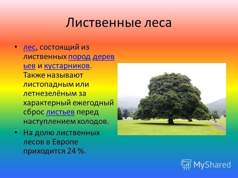 Лиственные леса лес, состоящий из лиственных пород деревьев и кустарников. Также называют листопадным или летнезелёным за характерный ежегодный сброс листьев перед наступлением холодов. леспороддеревьевкустарниковлистьев На долю лиственных лесов в Ев