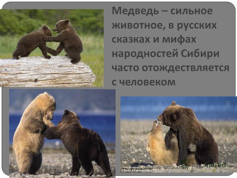 Медведь – сильное животное, в русских сказках и мифах народностей Сибири часто отождествляется с человеком